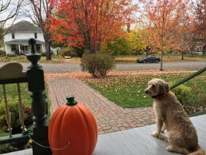 See the Fall Colors along the Root River Trail in scenic Lanesboro Mn this fall