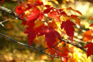 See the Fall Colors along the Root River Trail Near our Lanesboro Mn Bed and Breakfas