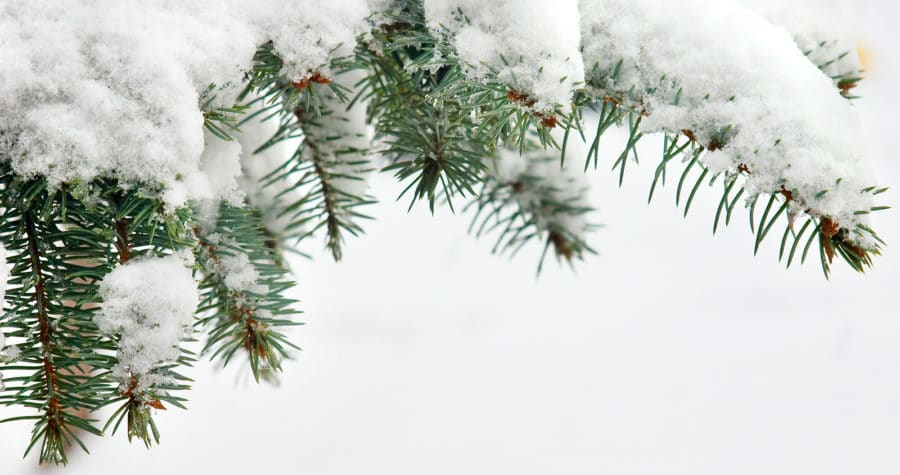 Come see Minnesota's Winter Wonderland in the Bed and Breakfast Capital of Minnesota!