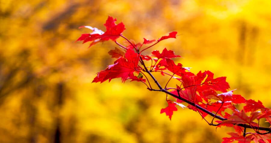 One of our favorite things to do in Lanesboro in the fall is to enjoy the glorious Minnesota fall colors